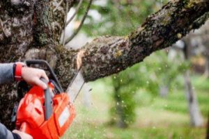 San Bernardino Tree Services